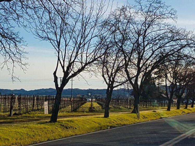 Napa Valley 2