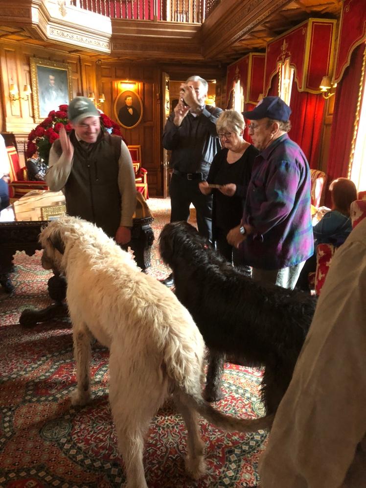 ashford csatle dogs